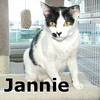 Jannie was adopted from the Cat House and Adoption Center on Saturday, April 24, 2010.<br /> <br /> Jannie<br /> <br /> Miss January<br /> 			<br /> Jannie is an all American girl. She will bring you sunshine on a cloudy day, make you smile when you are blue, and comfort you the whole year through.