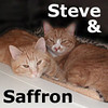Steve and Saffron were adopted from the Cat House and Adoption Center on Sunday, April 18, 2010.<br /> <br /> Saffron and Steve<br /> <br /> These two beautiful cats are easy-going, affectionate, and old enough to know what's right & wrong but young enough to be playful.<br /> <br /> Saffron likes to have short, quiet conversations.<br /> <br /> Steven is a bit more reserved, but cuddly once he knows you.