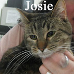 Jackie and Josie were adopted from the Cat House and Adoption Center on Saturday, April 17, 2010.