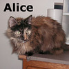 Alice (GMR #18) was adopted from the Cat House and Adoption Center during the Adoption Event Tuesday evening, April 6, 2010.