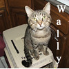 Wally (GMR #3) was adopted from the Cat House and Adoption Center during the Adoption Event on Tuesday evening, April 6, 2010.<br /> <br /> Wally<br /> <br /> Hello, welcome to Wal*Mart.<br /> <br /> Wally is a great greeter and happy to welcome you into his world. He is easing into being an altered boy and seems to be relaxing and without worry of protecting his ladies.
