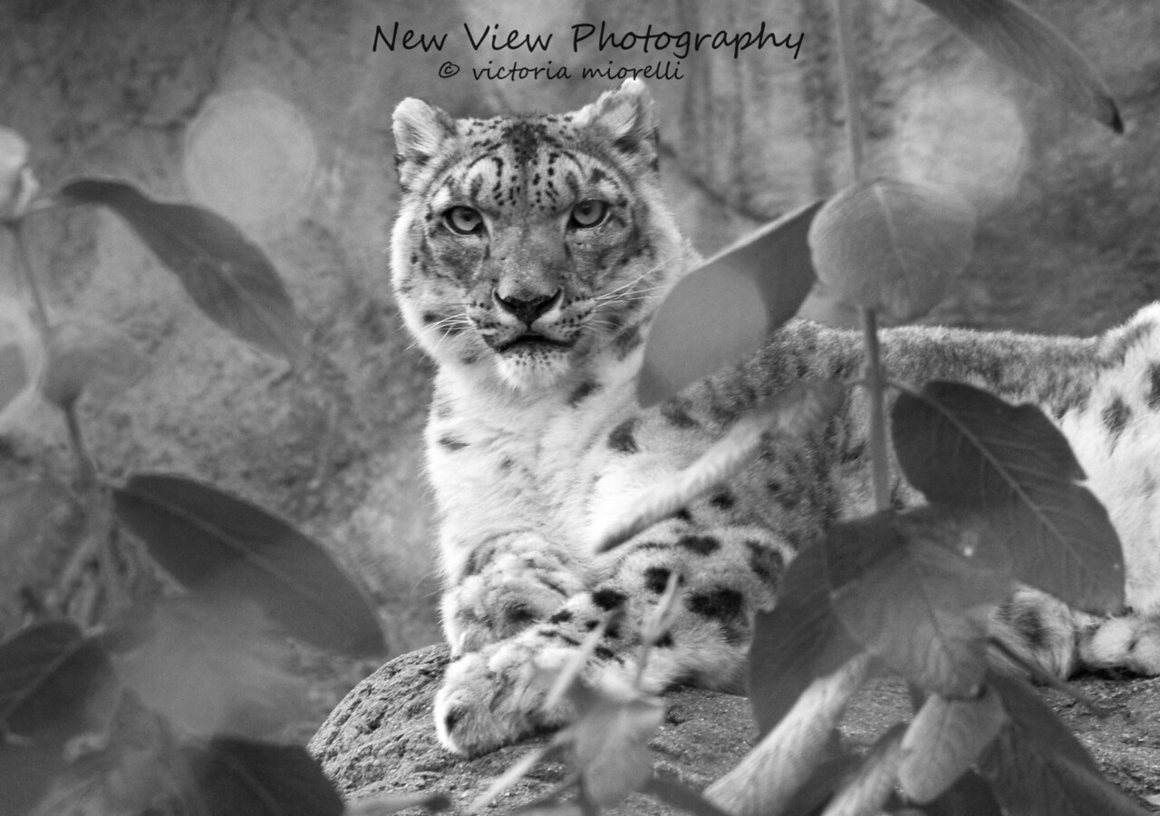"""I have eyes only for You"" black & white<br /> <br /> Captured at Roger Williams Zoo, Providence, Rhode Island."
