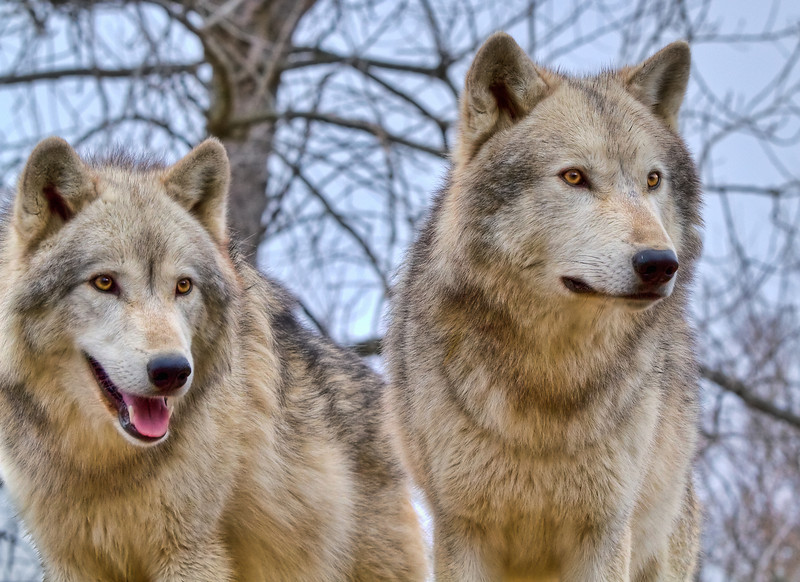 """Brothers""<br /> Wolf Creek Habitat<br /> Brookville, IN"