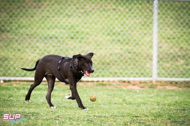 Quail Run Dog Park