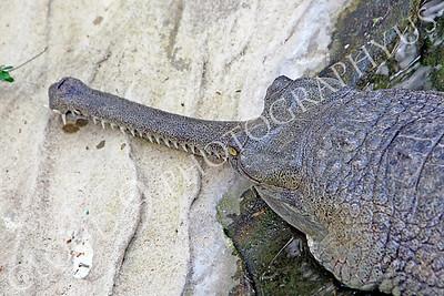 Fossil Croc 00003 by Peter J Mancus
