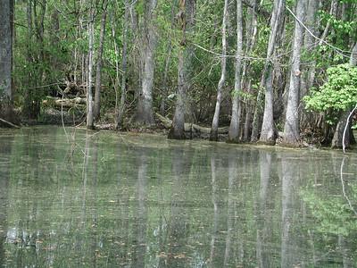 Alligator Canal2010
