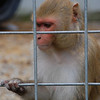 So many of these animals just look so sad in their cages.