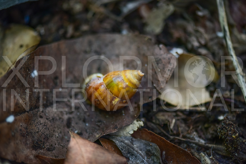 Snail - Need ID