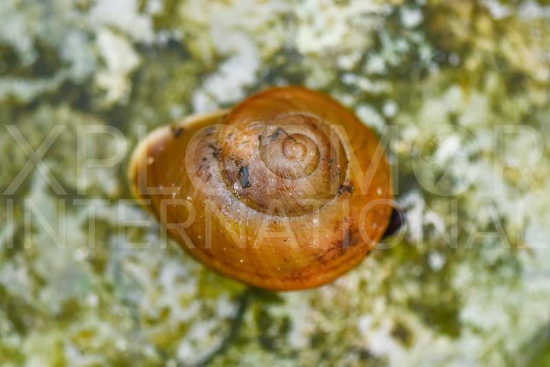 Land Snail - Need ID