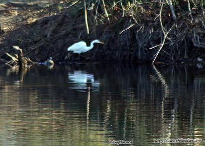 American River, Sacramento, January 2007