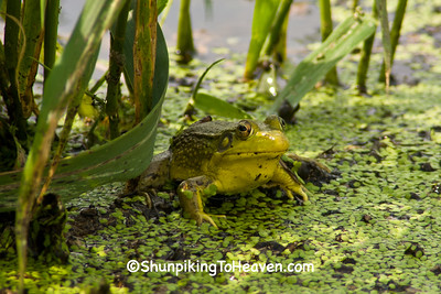 Bullfrog, Columbia County, Wisconsin