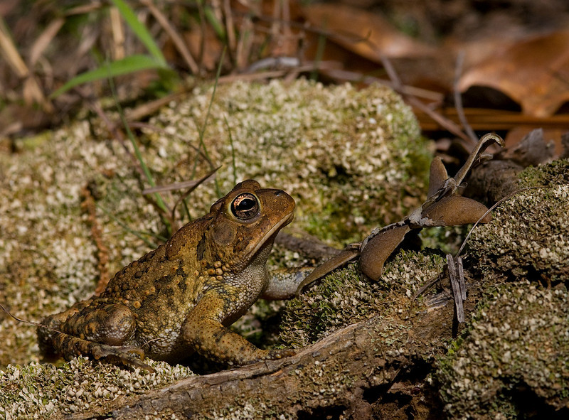 A toad poses for the lens