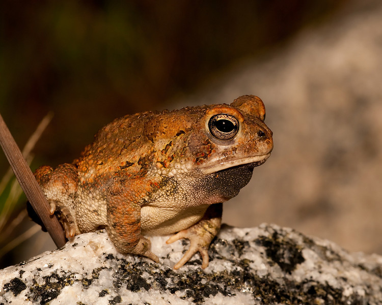 a toad surveys his surroundings