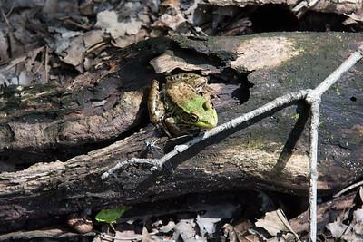 Broadmoor Wildlife Sanctuary - Natick MA.