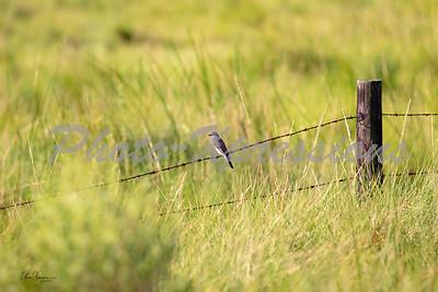 bird on a wire_4335