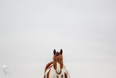 Anderson Horses