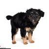 Puppy_JN1
