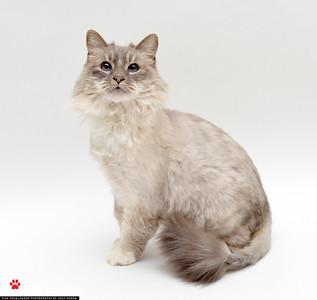 Kitty_A365335_JN_02