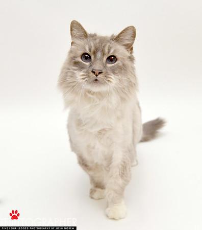 Kitty_A365335_JN_01