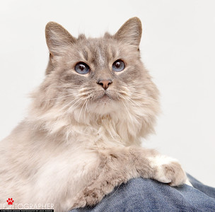 Kitty_A365335_JN_04