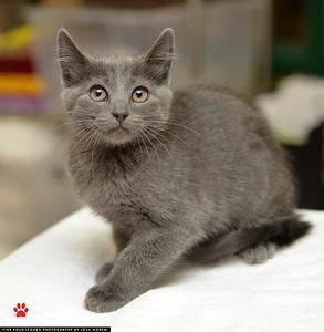 Foster Kitten 2