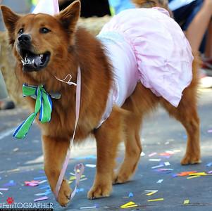 Transgender dog.