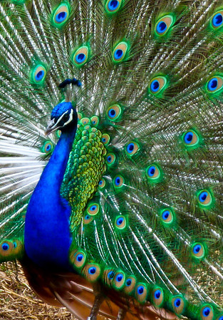Colorful plumage