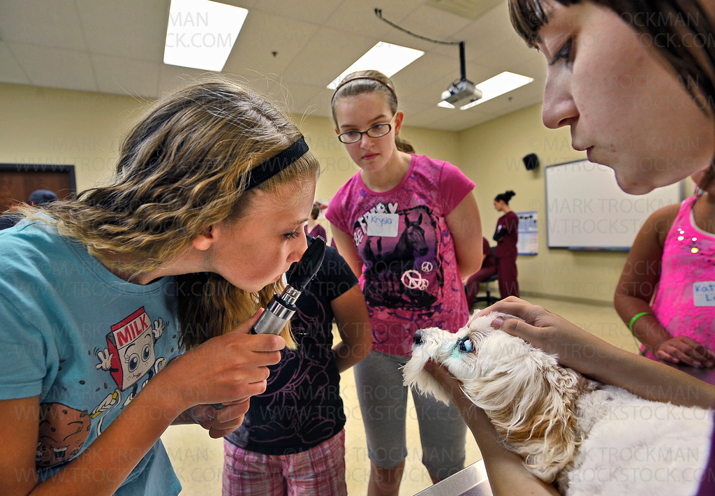 Melanie Smith, 13, uses an ophthalmoscope to test the eye health of Lucy, a four-year-old Cavishon, during Junior Vet Camp, held at the Minnesota School of Business in Plymouth Saturday, August 25.  Veterinary Tech student Martha Sutterlin, right, holds Lucy.  Junior Vet Camper Krysia Anderson, 12, center, waits for turn to check Lucy's eyes.