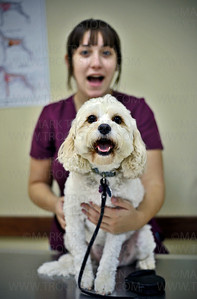 Minnesota School of Business Veterinary Tech student Martha Sutterlin holds on to Lucy, a four-year-old Cavishon, after Lucy had her eyes, ears and heart tested by several Junior Veterinary Camp participants Saturday, August 25, in Plymouth.