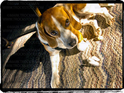Augie Doggie lit by the sun through a window blind • St. Cloud, Minn.