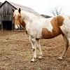 Lanas horse