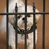 Giz behind bars