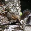 Hillsborough River State Park (Tampa,FL), 2 June 2014