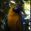 Leroy, The Macaw