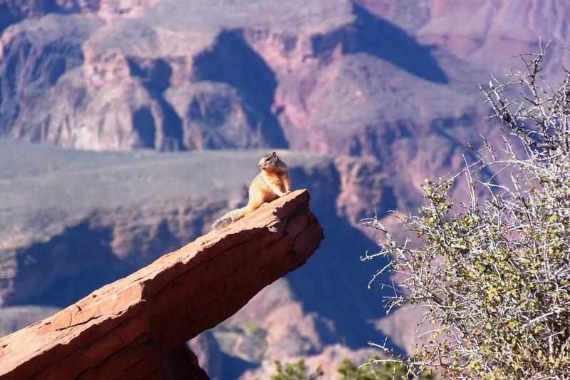 Kaibab Trail, Grand Canyon,November 2016