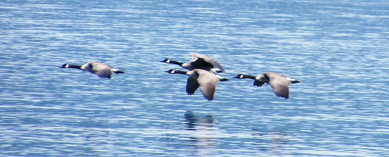 Cayuga Lake - 4 Aug 2014