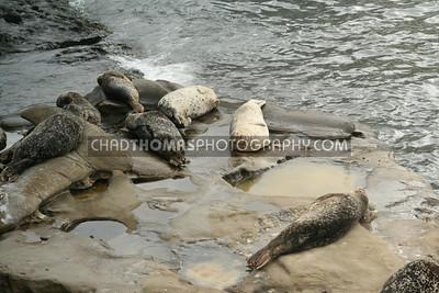 © chadthomasphotography com 20073765