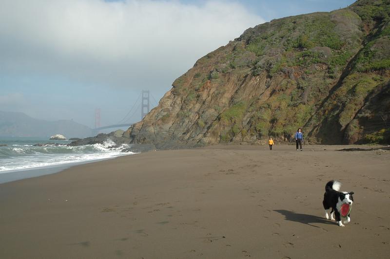 A dog on Baker Beach near the Golden Gate Bridge.