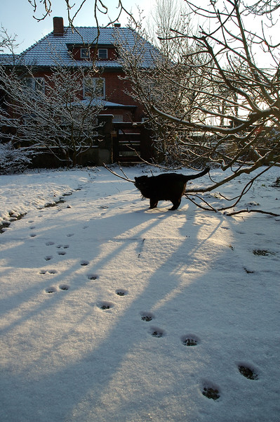 Pawsteps in the snow.