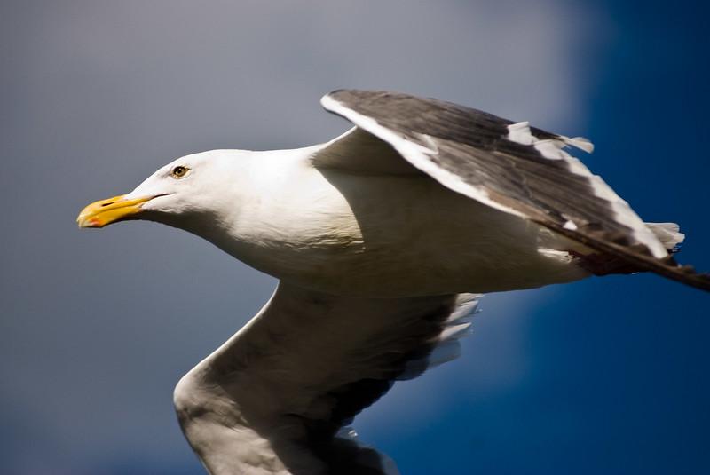 Fast bird.