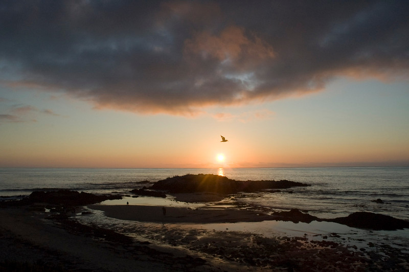 Sunset bird near Half Moon Bay.