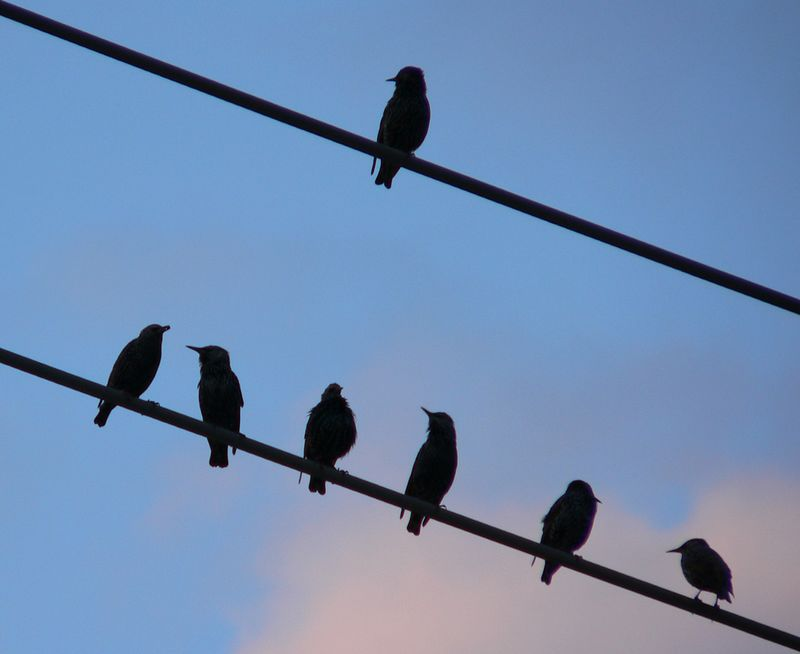 : : Bird on a Wire : :