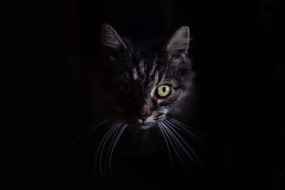 Animal Portraiture