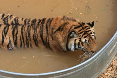 Animal Sanctuary Jun 2, 2011
