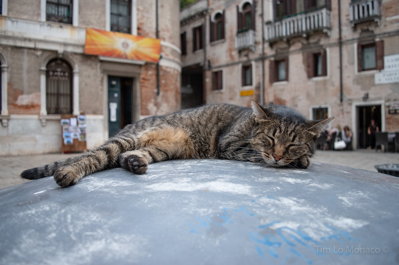 Lazy Day in Venice