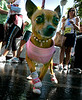 Lauri Julian's Chihuahua, Chole, sports pink tennis shoes and t-shirt after she participated in the The Komen Race for the Cure.  It is one of the largest series of 5K runs and walks in the world.  It   is open to everyone who wants to help in the fight against breast cancer. The event was held at Fashion Island in the city of Newport Beach.