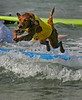 A Golden Retriever get air, as she flies off a surfboard, during the 3rd annual dog surfing competition.  The Surf-A-Thon was held at Dog Beach in Del Mar. The money made from the event helped to raise awareness for orphaned pets.