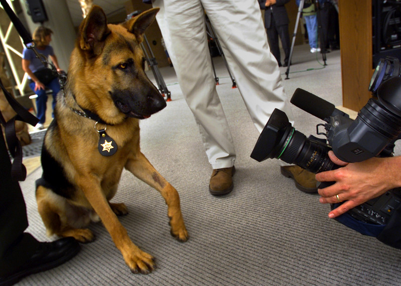 """Ali"" a bomb-sniffing dog reacts to the media attention he was receiving at John Wayne Airport.  According to his handler Orange County Sheriff Deputy, Dave Ray;  ""We want him to be alert and curious."""