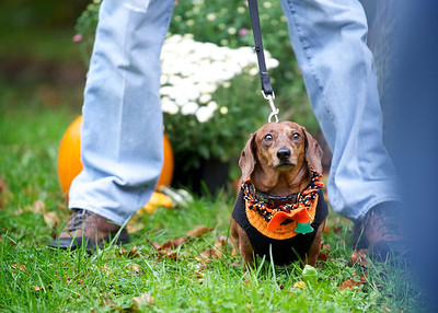 Animal Protectors Dog Walk