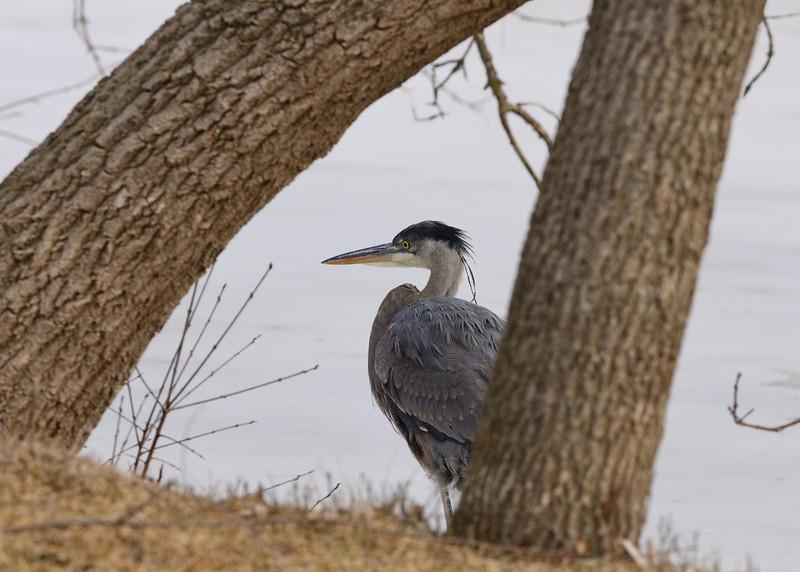 February heron